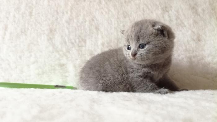 Аврелий британский коти3