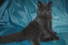 DSC_0847 британский котик
