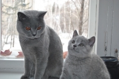 DSC_0585_ Британский котик