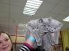 британский котенок Руфина23