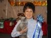 Британская кошка Ачинск2