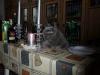 британский кот Ирбис 3 года