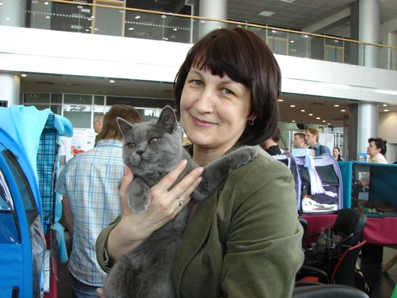британский кот Ирис у Светы