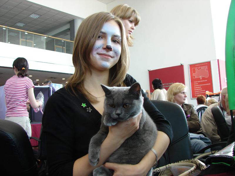 британский кот Ирис на руках