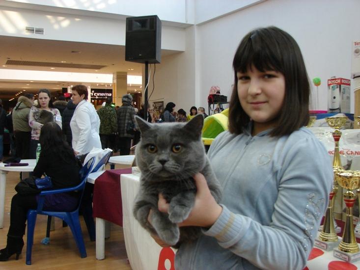 британский кот Ирис Гелена2