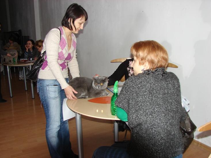 британский кот Ирис Светлана