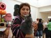 британская кошка Иветта Марина