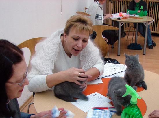 британские котята Л у эксперта Ермаковой