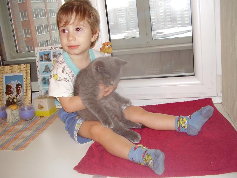 британский кот Лир Миша2