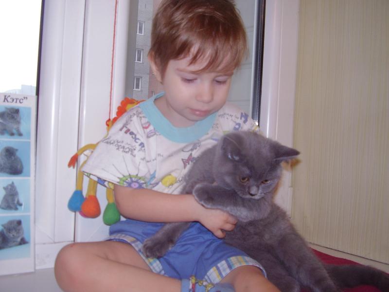 британский кот Лир Миша3