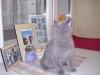 британский кот Лир4