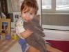 британский кот Лир Миша