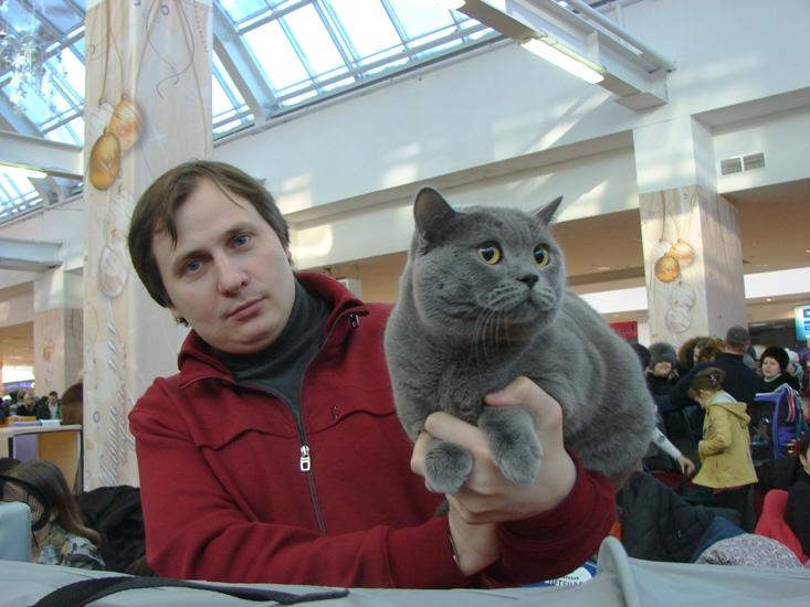 британский кот Милий выставка