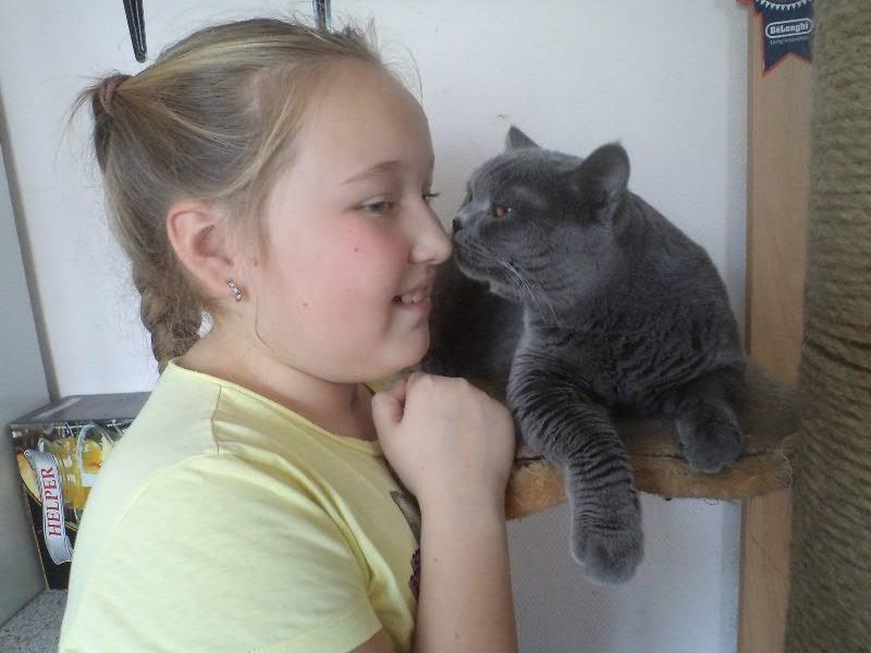 британский котик Набукко дочка