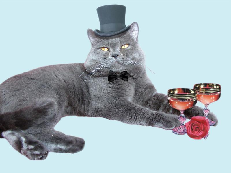 британский кот Найсон в цилиндре