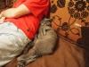 британский кот Нил4