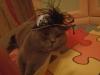 британский кот Нил5