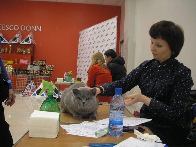 Британский кот у Курдгелии 20150404 6