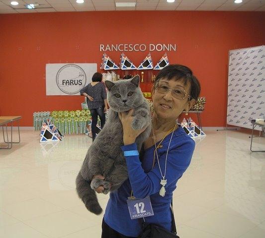Британский кот на выставке20150404 8