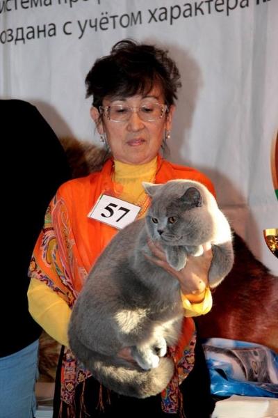 Британский кот ring-komarovoyring-komarovoy6