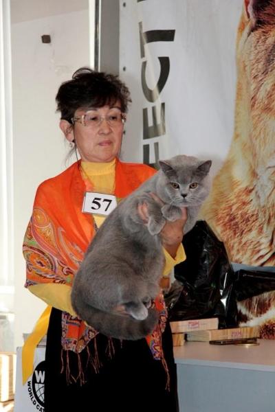 Британский кот ring-komarovoyring-komarovoy8