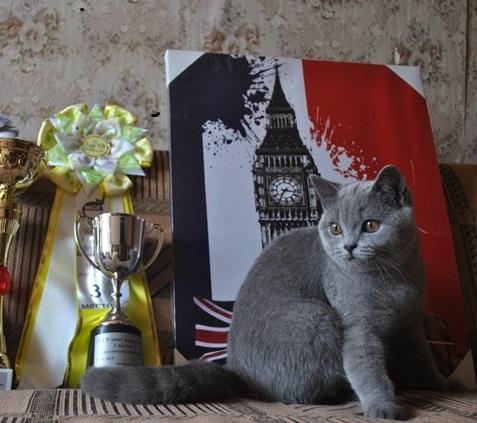 британская кошечка Ульрика3