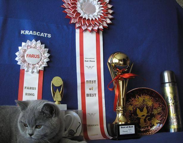 Британский котик с наградами