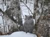 Британский кот нашел узкие ворота