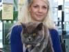 британская кошка Зимфира Катя